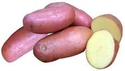 картофель крупный лучшие сорта